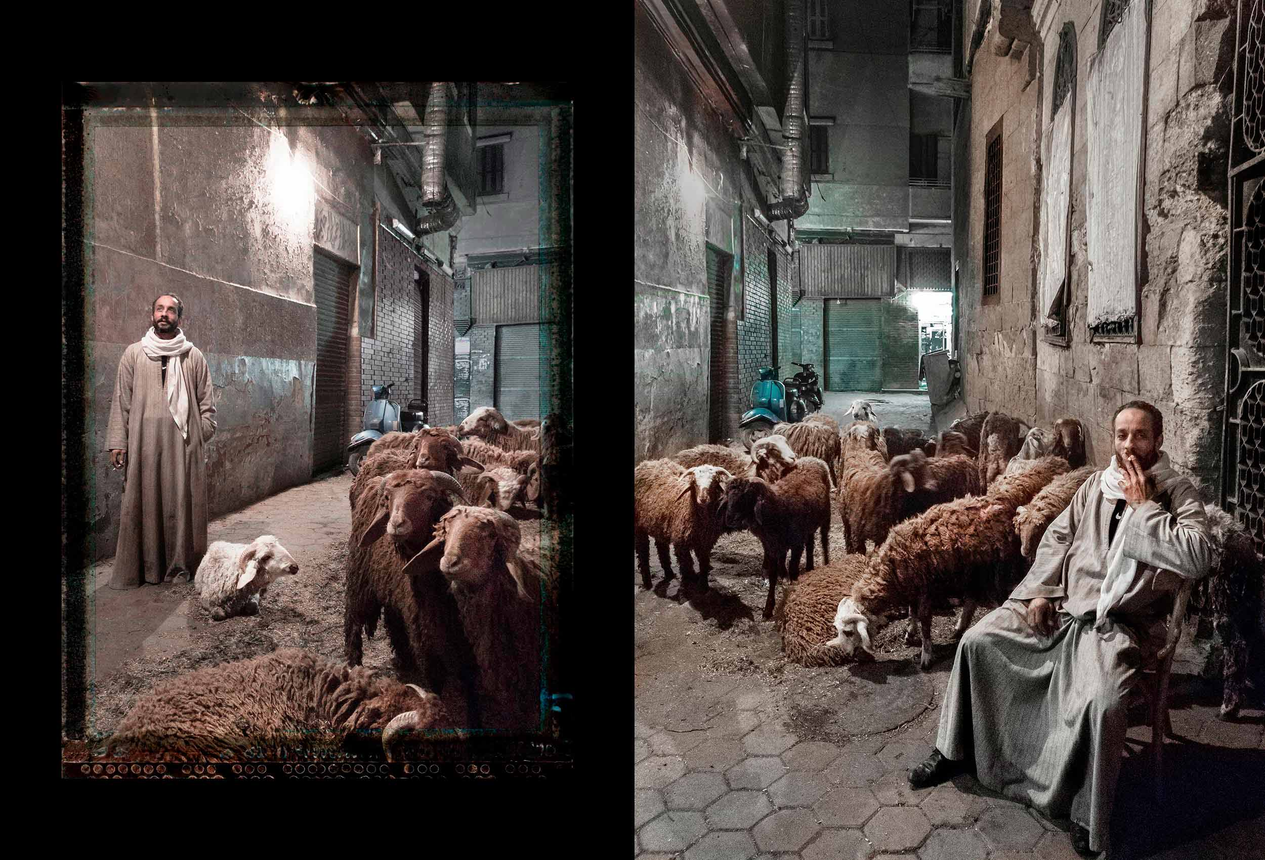 a cairo street vendor with his sheep by award winning travel photographer john hryniuk