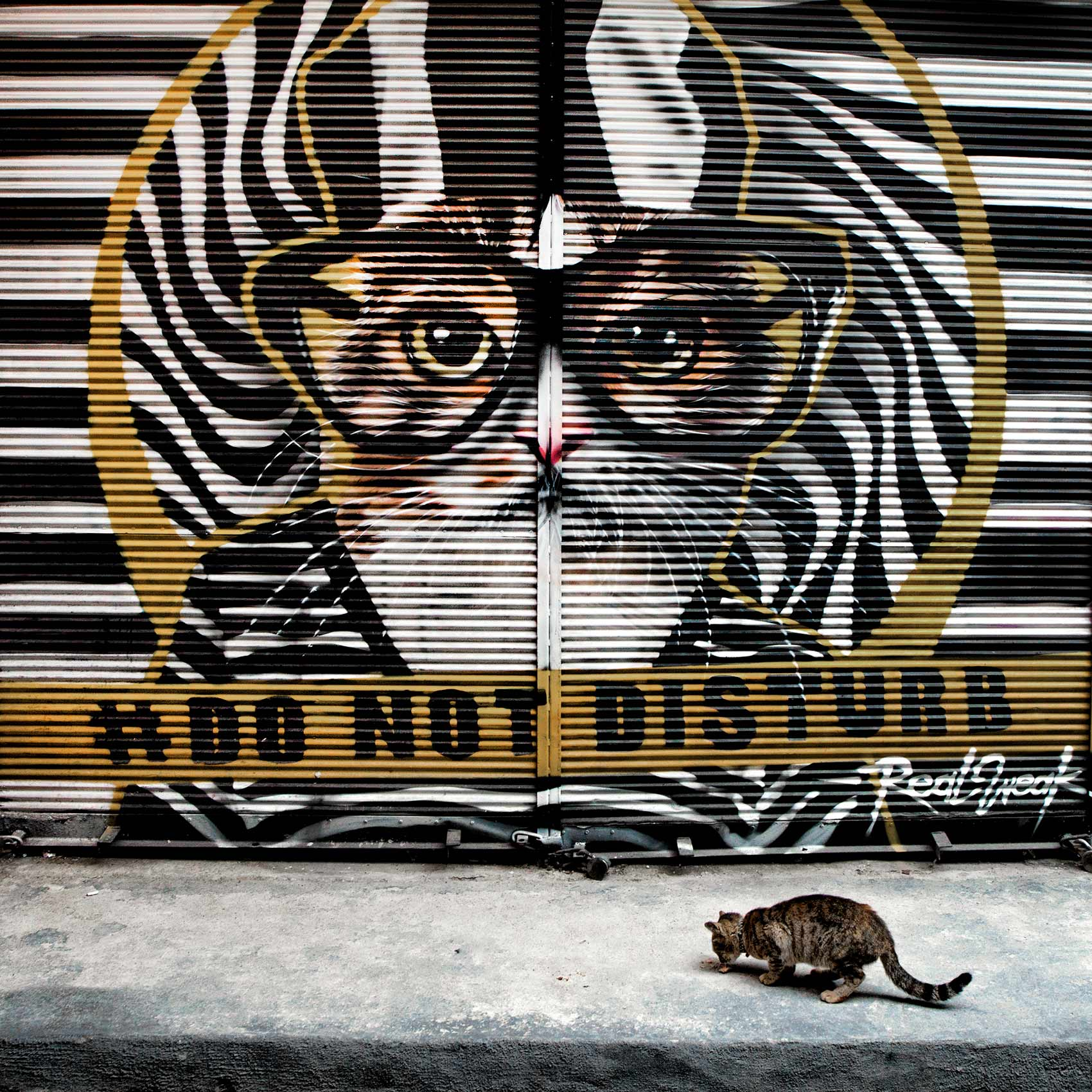 a-kitten-eats-some-food-on-a-sidewalk-on-the-streets-of-istanbul-in-front-of-a-graffiti-portrait-of-a-cat