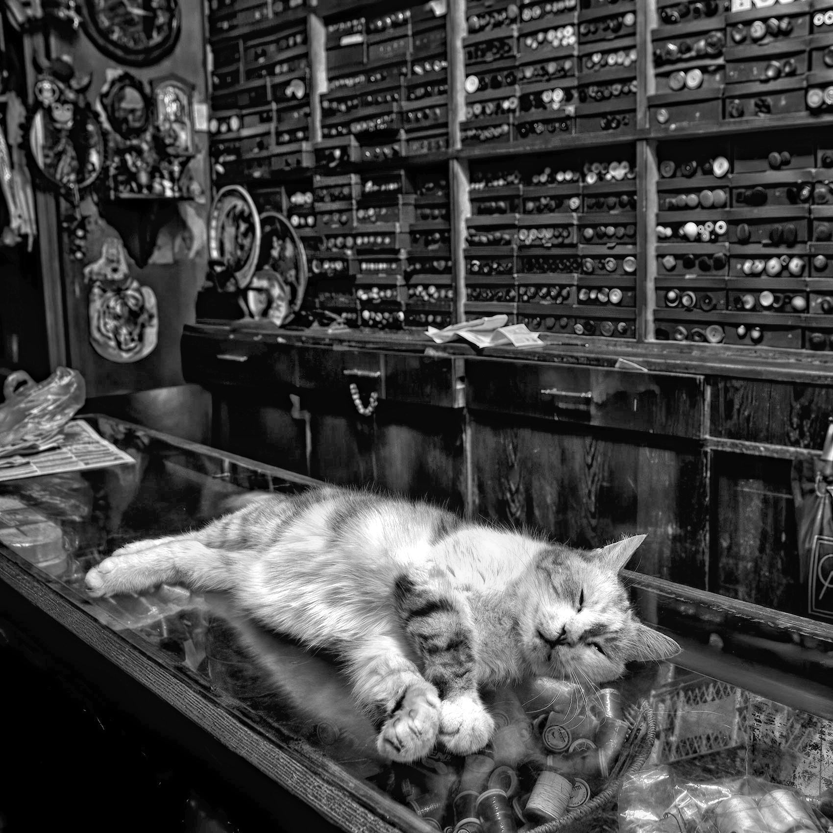 a-cat-sleeping-on-a-store-counter-in-an-istanbul-shop-near-istiklal-caddesi