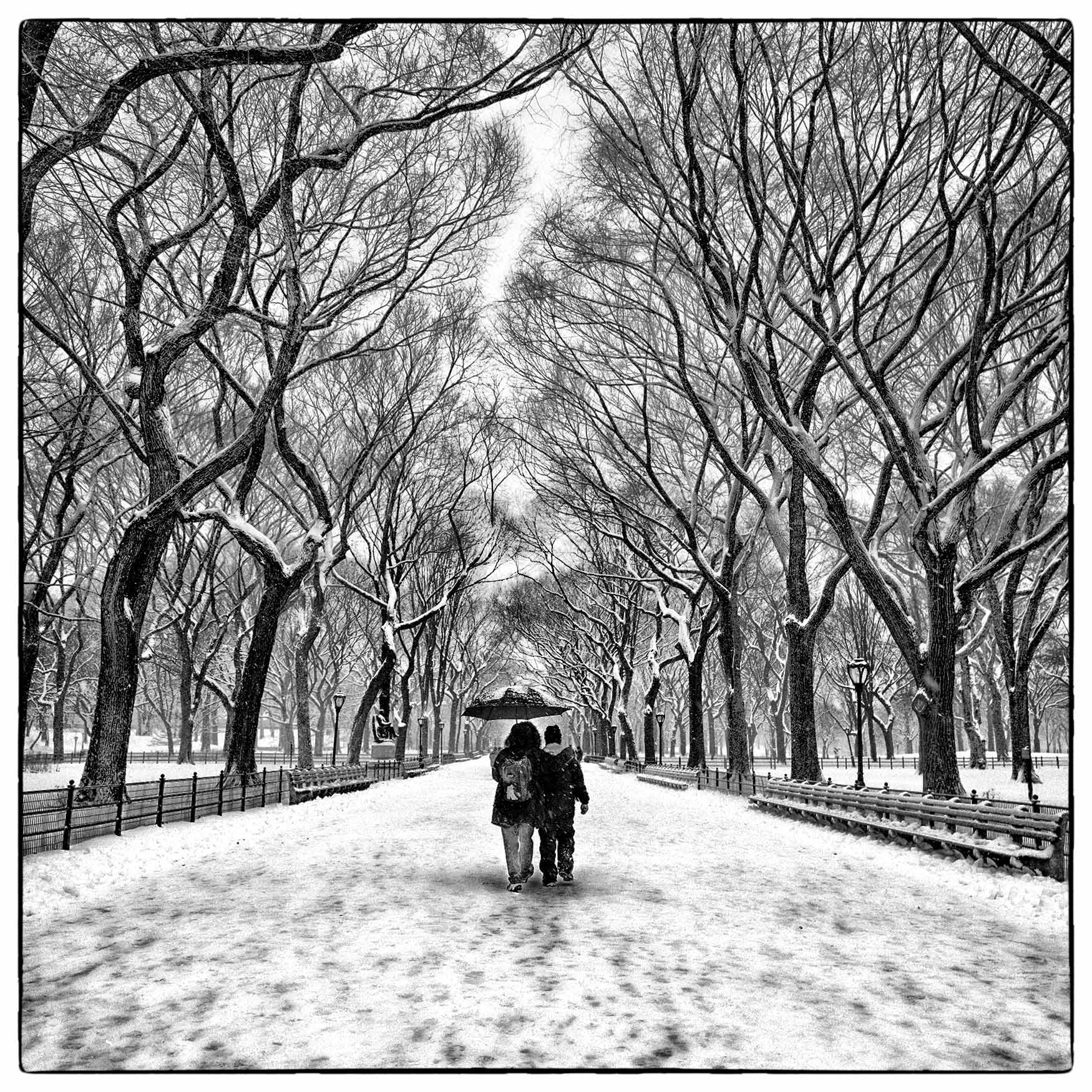 a-couple-is-framed-by-large-trees-as-they-walk-in-new-yorks-park-during-a-heavy-snow-storm