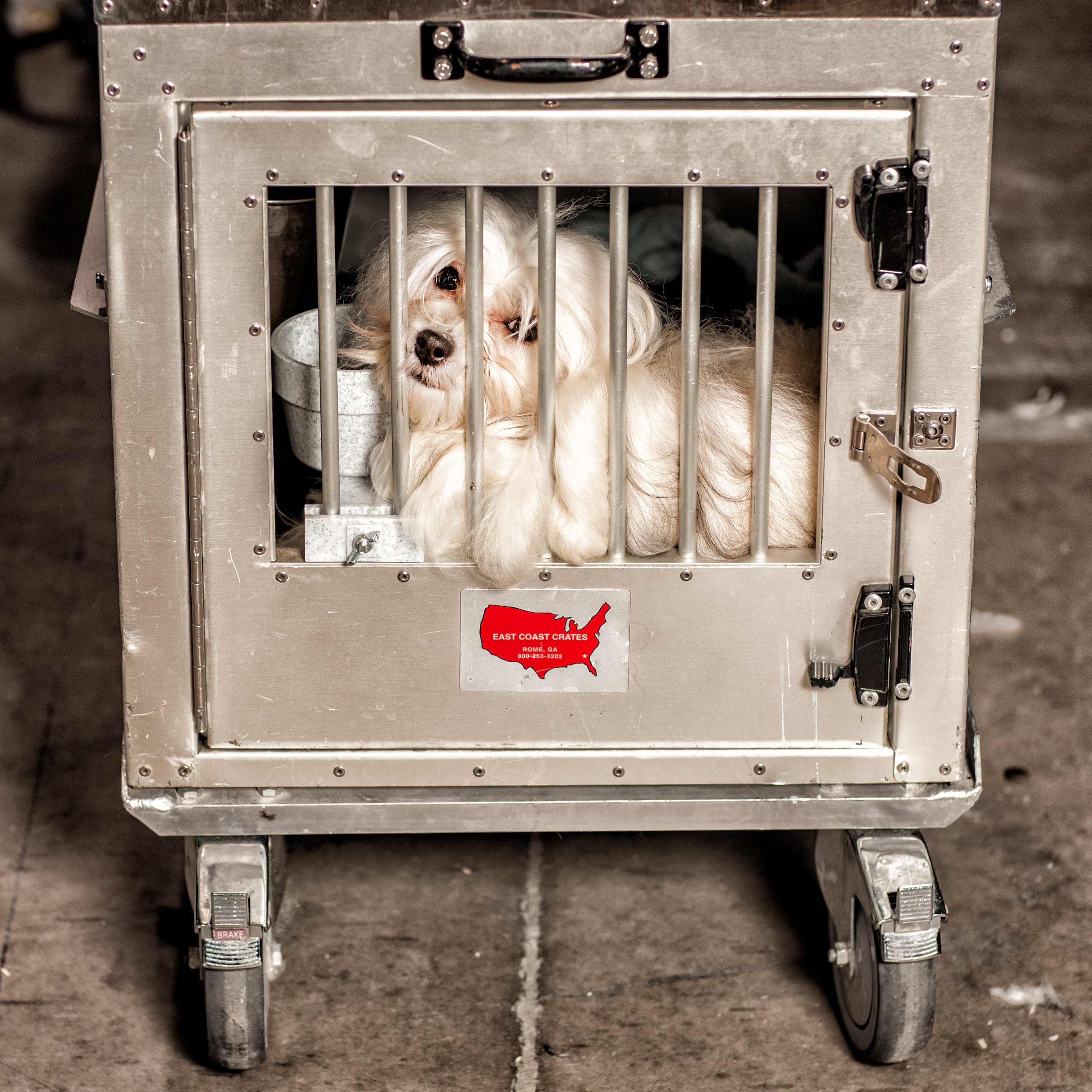 a-dog-peers-out-of-her-travelling-cage-at-the-purina-national-best-in-show-in-toronto-canada