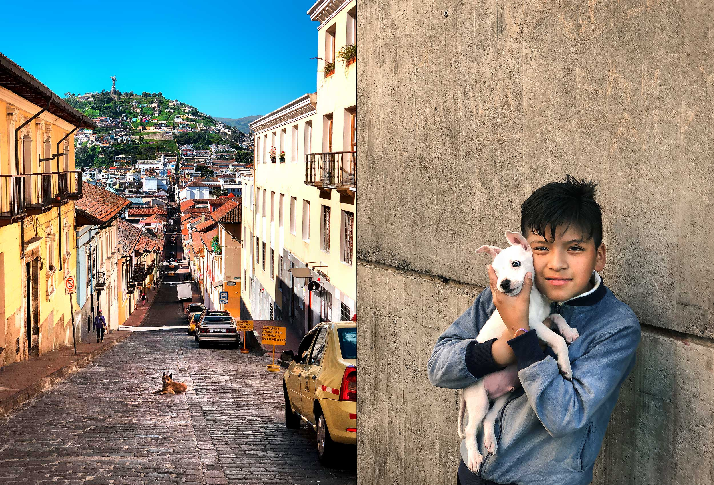 a dog sits in the middle of a street with the virgin of quito statue and hillside viewed in the background.