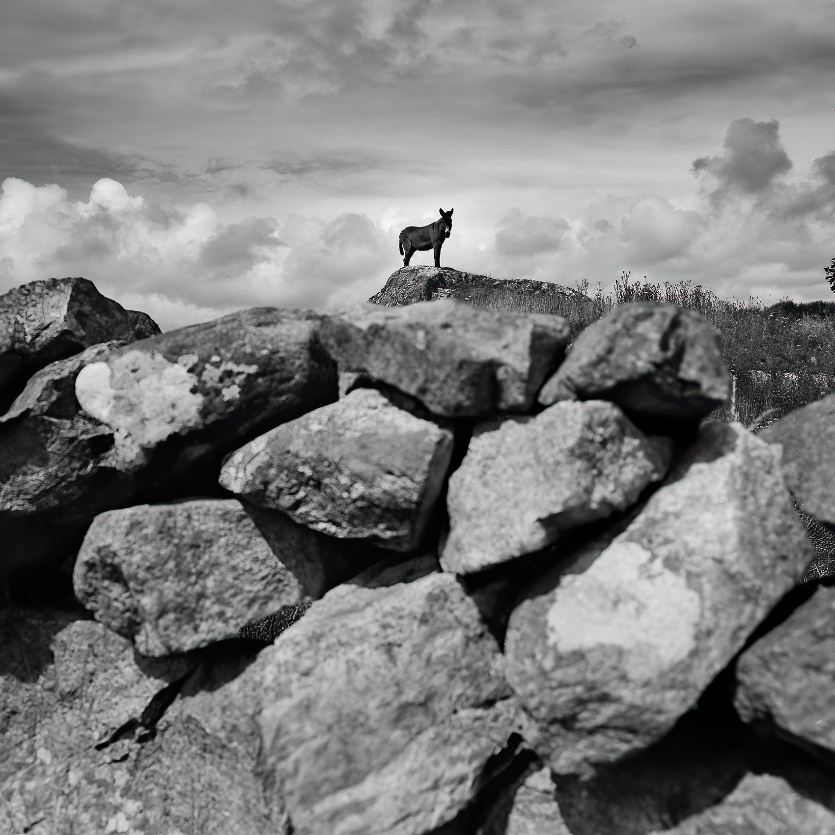 a-donkey-stands-on-a-rock-in-the-irish-countryside-near-cork-ireland