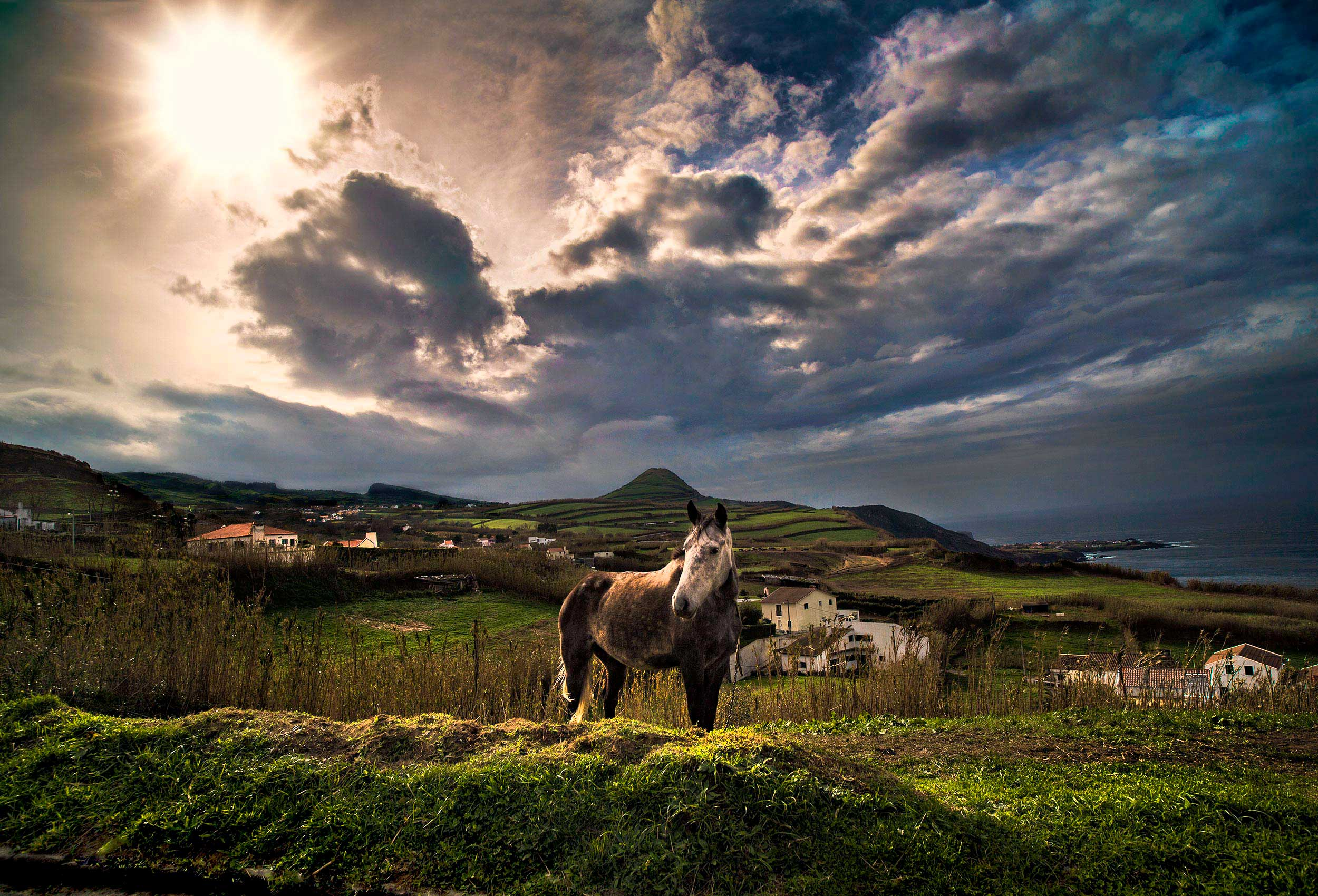 a horse stands on a hill as a storm rolls in off the atlantic ocean on san miguel island in the azores