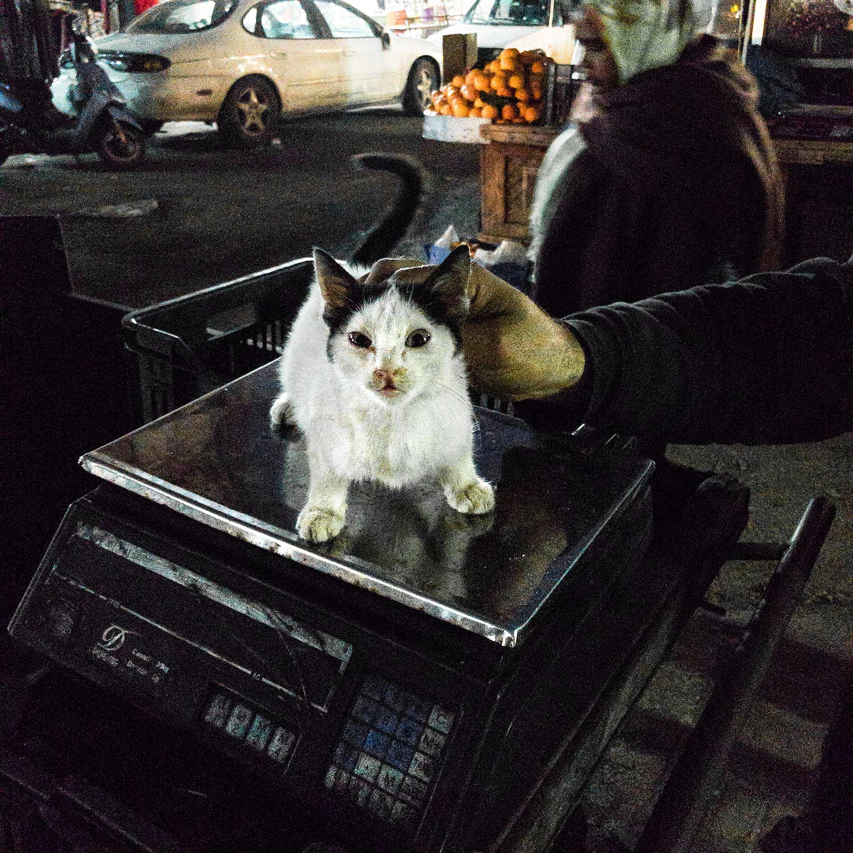 a kitten sits on a scale at the mar elias market in souther beirut lebanon