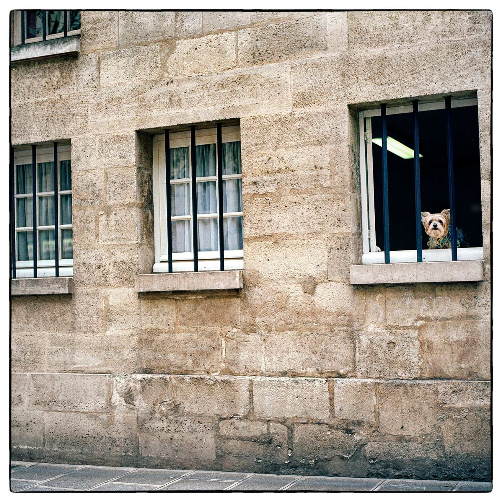 a-puppy-looks-out-the-window-of-a-historic-buidling-in-central-paris-france