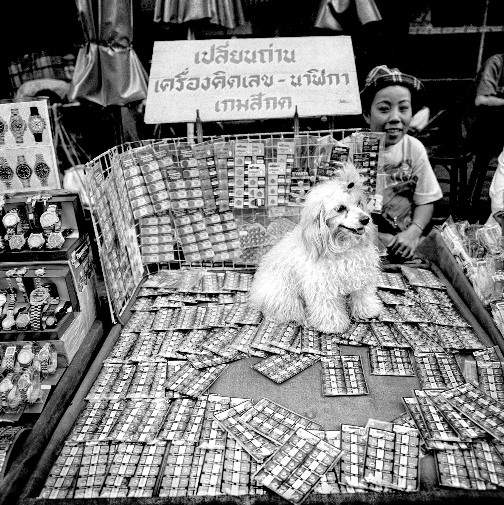 a-womans-pet-poodle-sits-on-a-table-of-lottery-tickets-in-bangkok-thailand
