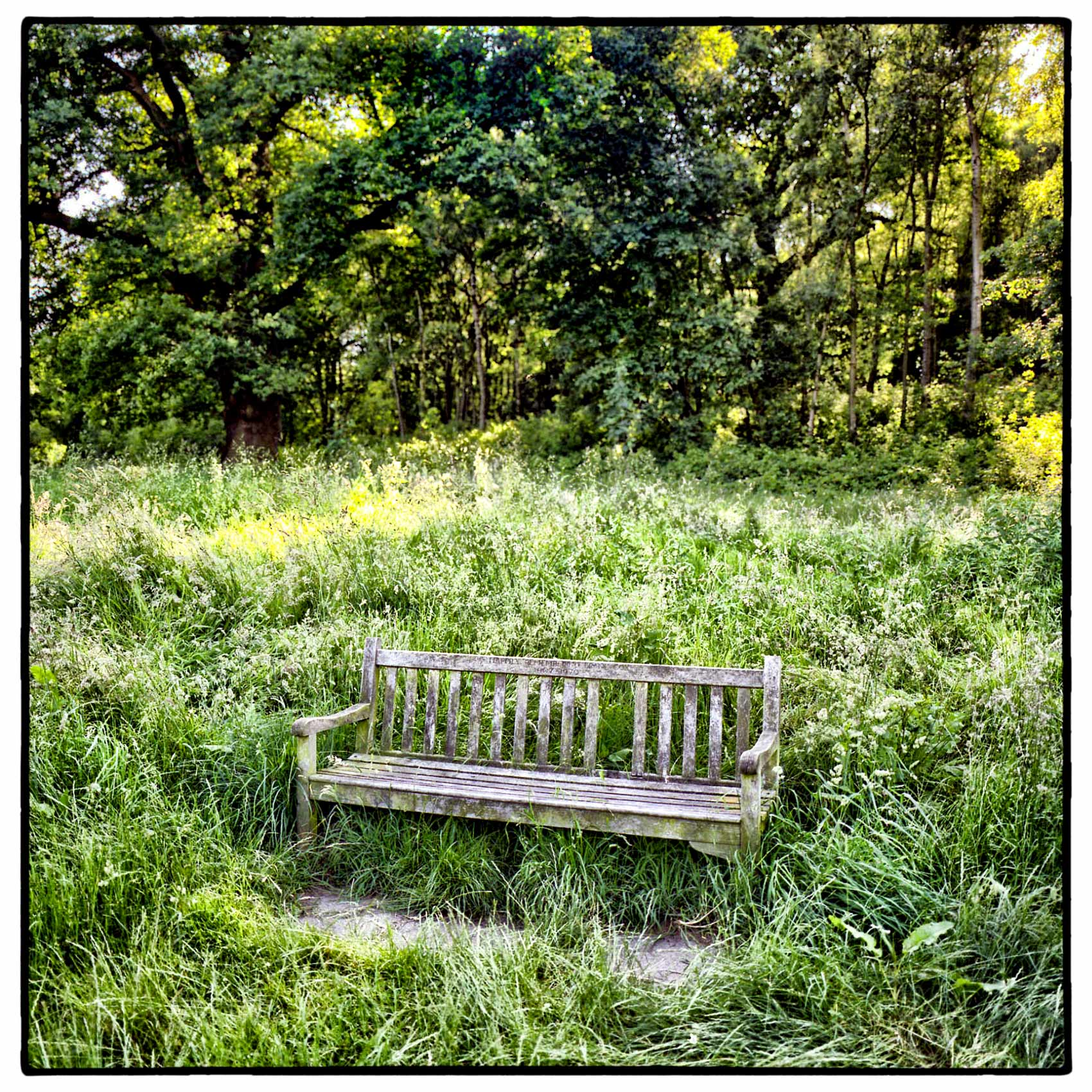 an empty park bench sits in the setting summer sunlight in hampstead heath england