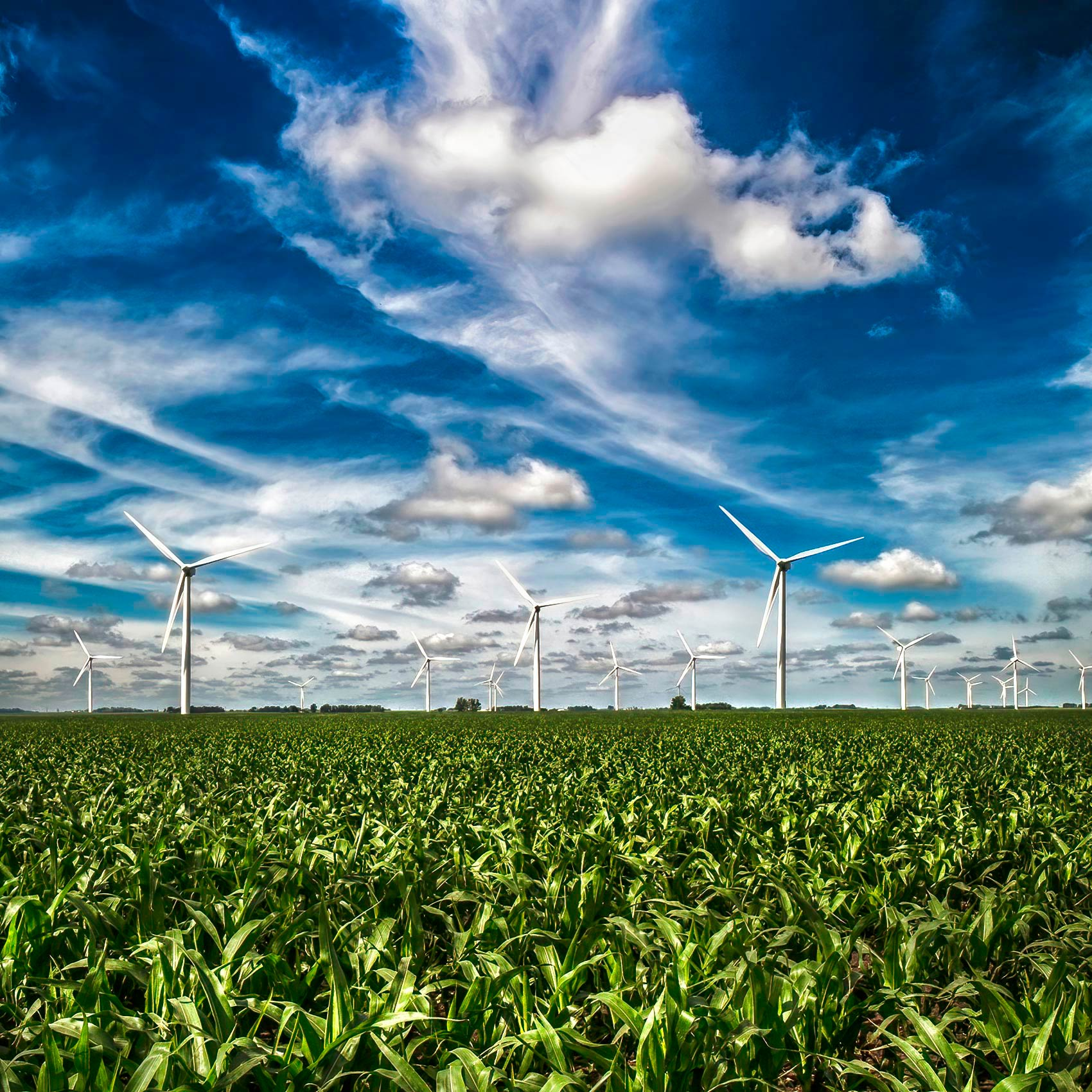 amazing-photo-of-a-group-of-wind-turbines-in-a-field-in-south-dakota