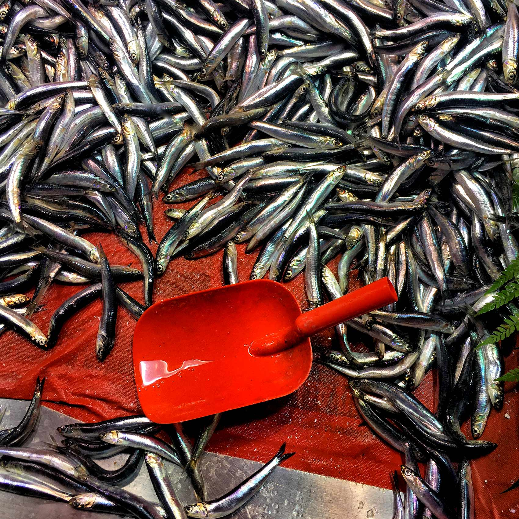 fish-for-sale-at-a-seafood-market-on-the-streets-of-istanbuls-karakoy-district