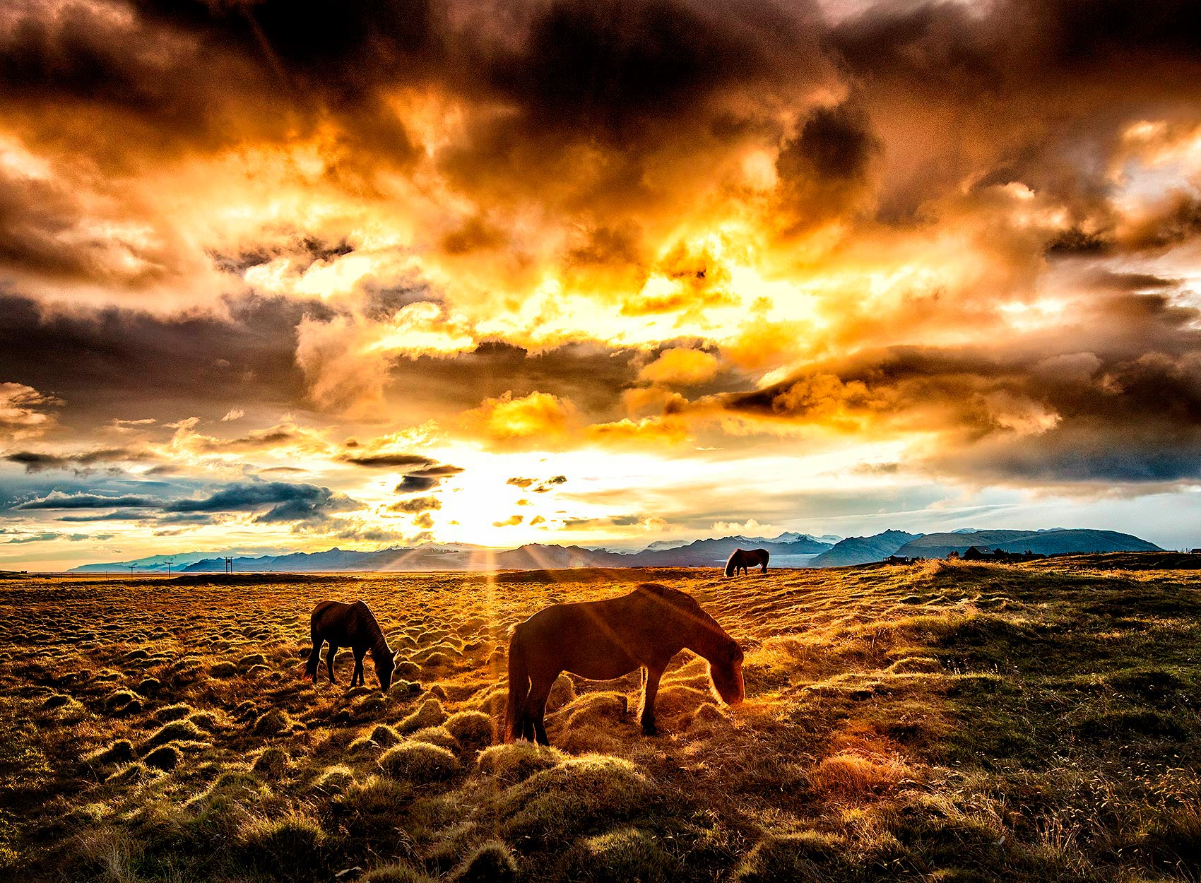 horses graze in front of a brilliant sunset in southern iceland