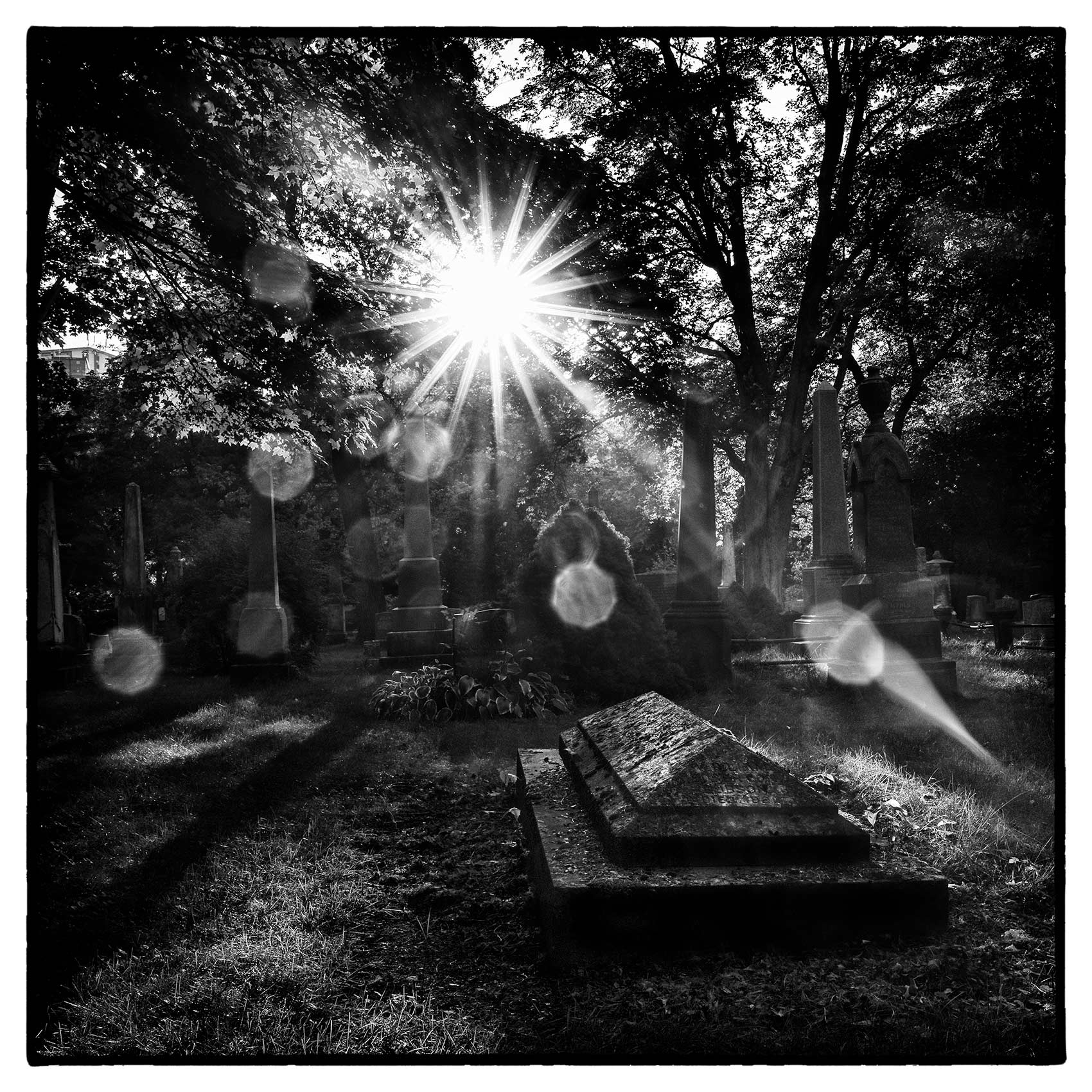 the sun breaks through the trees above a grave in Torontos St. James Cemetery