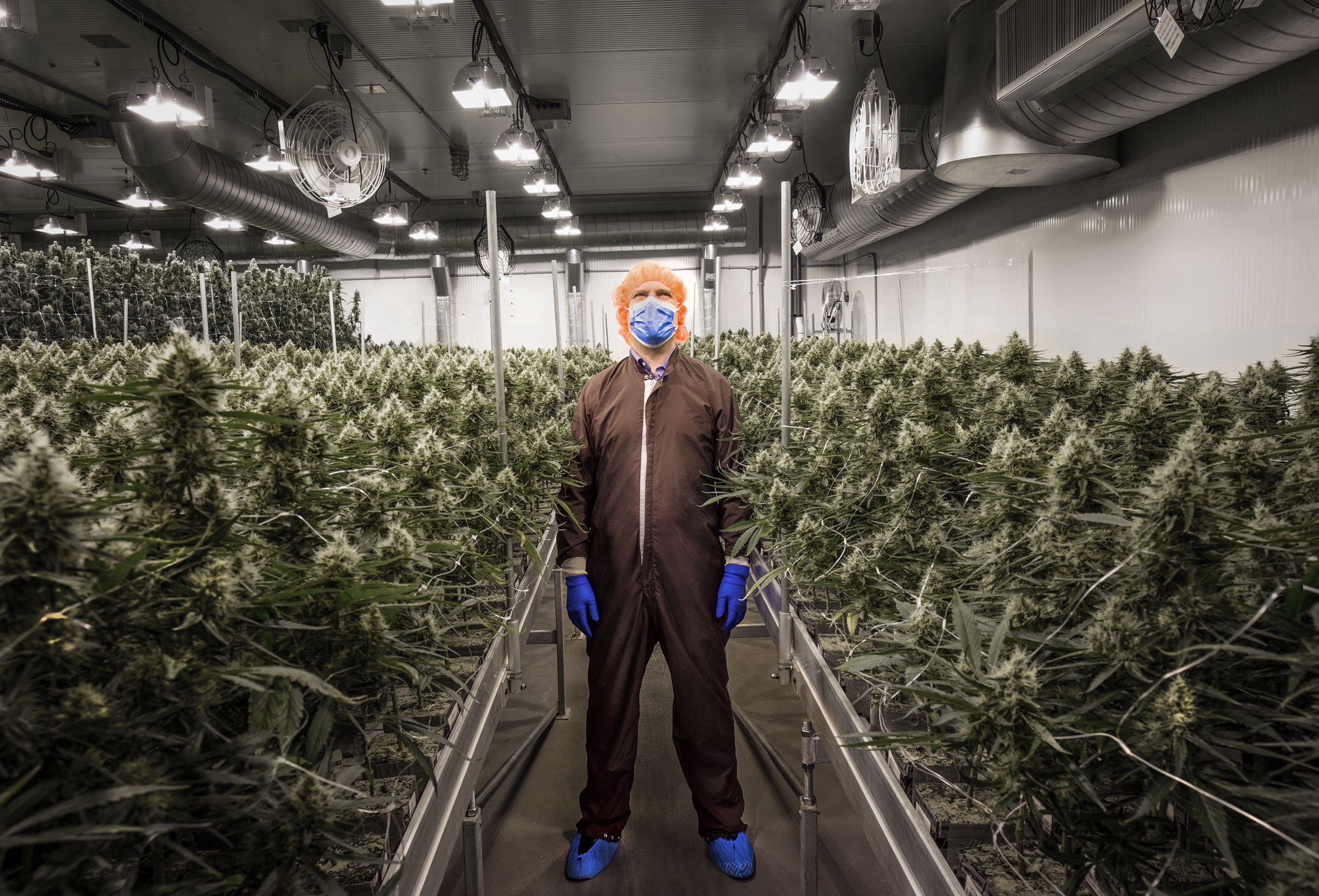 Aurora Cannabis greenhouse by Canadian cannabis photographer John Hryniuk